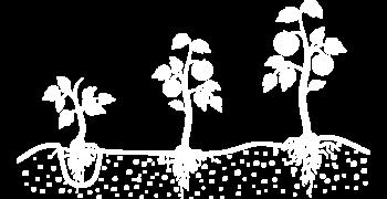 disegno-piante-bianco